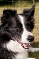 0704-pet_portraiture
