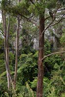 1180-australian_rain_forest