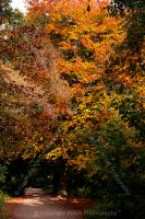 3233-autumn_colours