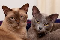 3857_two_pet_cats_posing