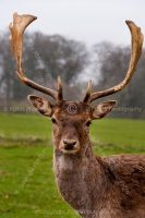 9481-wildlife_photography_-_deer